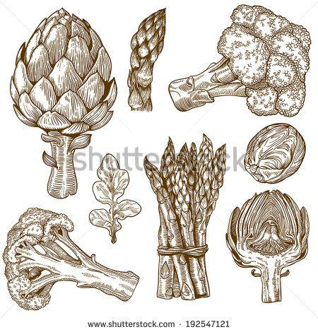 vector set of engraving illustration green vegetables on white background