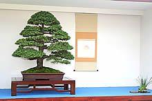 Takonoma-kazari to ekspozycja W specjalnie przeznaczonym do tego celu pomieszczeniu w japońskim domu. Wystawianie bonsai w pokojach typu europejskiego nazywane jest Yoma-kazari. Większe lub mniejsze wystawy zorganizowane w przeznaczonych do tego celu pawilonach to Seki-kazari. Wystawa bonsai na wolnym powietrzu- w ogrodzie lub patio, nazywana jest Niwa-kazari.  BONSAI - Sztuka miniaturyzacji drzew i krzewów