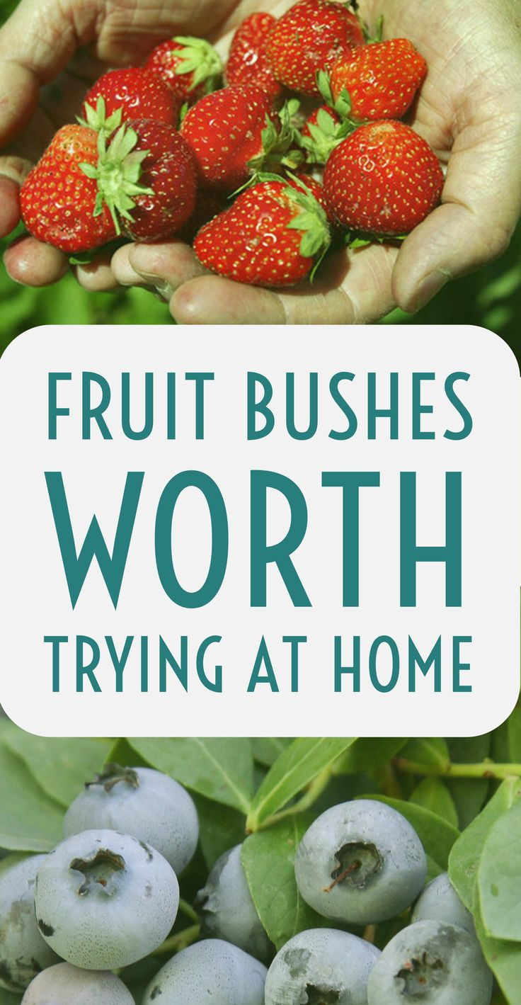 Fruit bushes are a hot grow-your-own item. Most are fairly easy to grow at home. Here's 10 of the best to try.