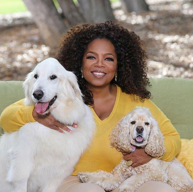Quem assopra as velinhas nesse domingo é @oprah! A apresentadora que comemora 63 anos acumula múltiplos prêmios por seu programa The Oprah Winfrey Show o talk-show com maior audiência na história da TV americana. Além disso ela foi indicada ao Oscar por A Cor Púrpura e já foi eleita a mulher mais rica do mundo do entretenimento. Parabéns!  via HARPER'S BAZAAR BRAZIL MAGAZINE OFFICIAL INSTAGRAM - Fashion Campaigns  Haute Couture  Advertising  Editorial Photography  Magazine Cover Designs…