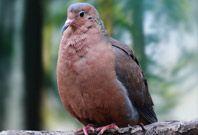 Socorro Dove Picture
