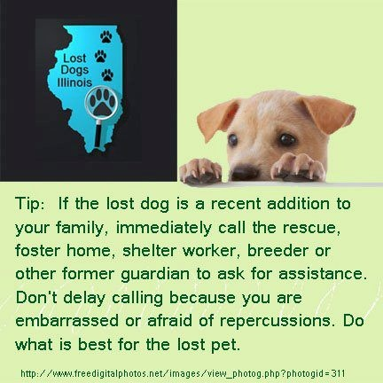 29 best Tips\/Hints to Help with Lost\/Found Dogs images on - missing pet template