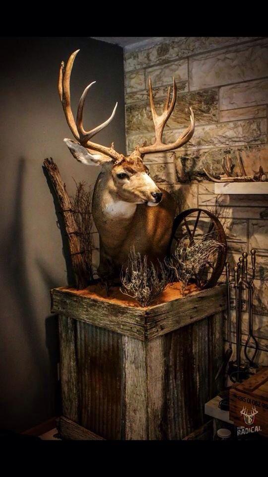 Love this Mount Set Up!! Beautiful Mule Deer