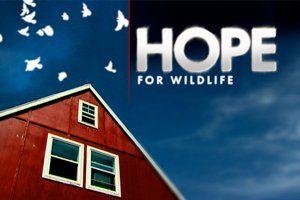 """Vahşi Yaşam İçin Umut Merkezi çeşitli nedenlerle yaralanan veya öksüz kalan yabani hayvanların bakımı ve tedavisini üstlenmiş bir rehabilitasyon merkezidir. Hope Swinimer'in kendi çiftliğinde kişisel çabalarıyla başlattığı bu girişim zamanla yasal bir statü kazanmıştır.    Vahşi Yaşam İçin Umut belgeseli pazartesi, çarşamba ve cuma günleri saat 09.00 ve 16:00 olmak üzere günde iki defa yayınlanacaktır. Vahşi Yaşam İçin Umut """"Hope For Wild Life"""", TRT HD'de…"""