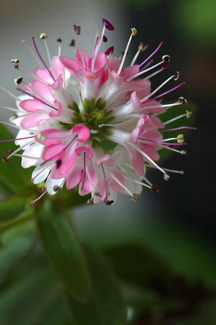This Pin was discovered by Christina Polites. Discover (and save!) your own Pins on Pinterest. | See more about flowers.