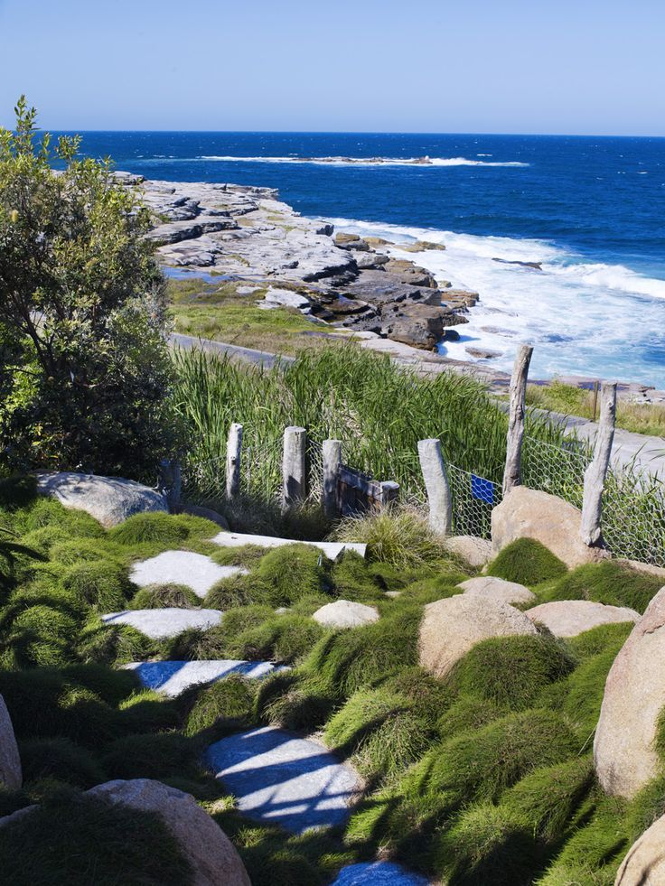 Lomandra 'Tanika', Casuarina 'Cousin It', Aloe 'Big Red' and Fucraea foetida have been planted in drifts around this section of the garden. Will Dangar Coogee Garden