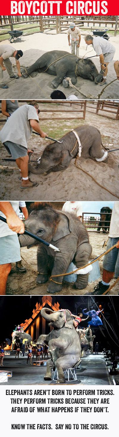 Boycott the Circus! Know the facts... Elephants aren't born to perform tricks. They perform tricks because they are afraid of what happens if they don't.