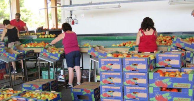 Την Πέμπτη τίθενται σε ισχύ οι νέες αποζημιώσεις για τα λαχανικά και τα φρούτα