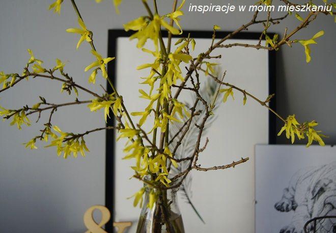 inspiracje w moim mieszkaniu: Wiosenny bukiet forsycji i wierzbowe bazie