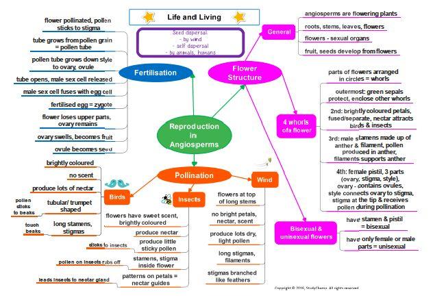 Life Sciences: Plant Reproduction