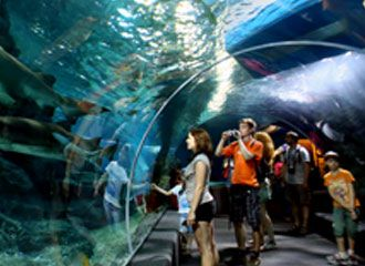 SEA LIFE Bangkok Ocean World: $20-25/person