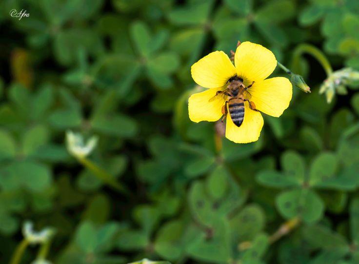 Εσύ η μέλισσα κι εγώ το νέκταρ...