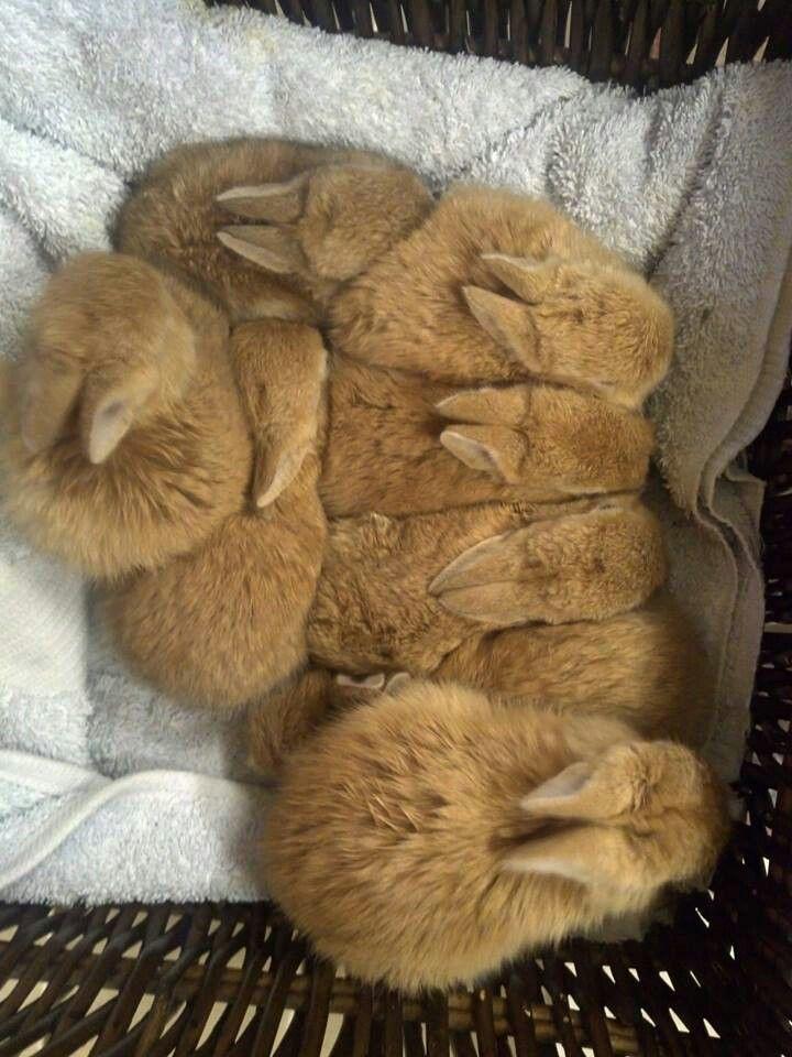 Sweet sleeping baby bunnies:)