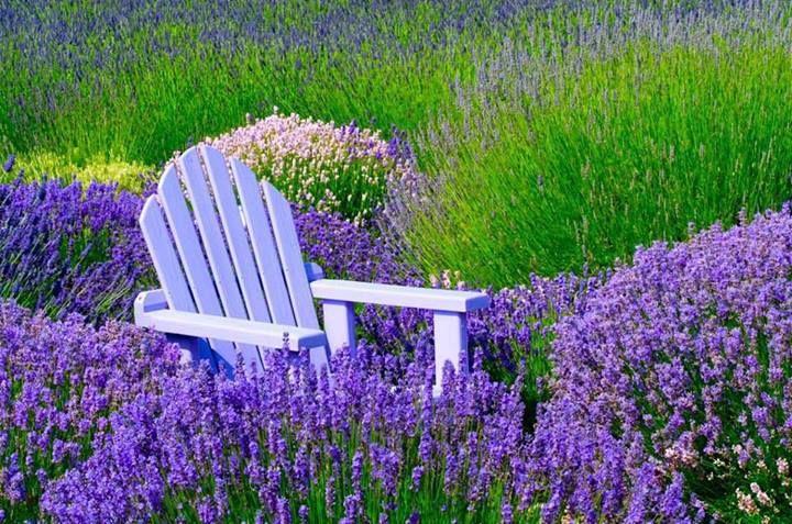 on the purple side