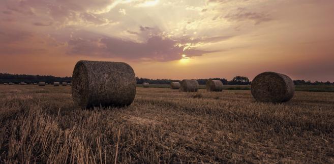 Jak wynika z badania, zmniejszyły się przychody z produkcji rolnej i oszczędności gospodarstw rolnych, poprawił się natomiast ich stan zadłużenia.