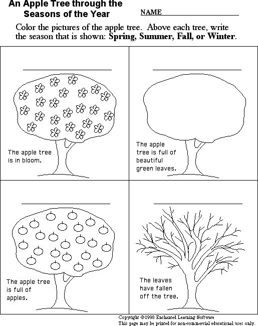 I like this activity for the purpose of talking about apple harvesting and how the apple trees change through the seasons.