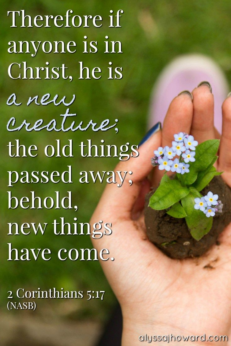 Image result for picture of new life in Christ