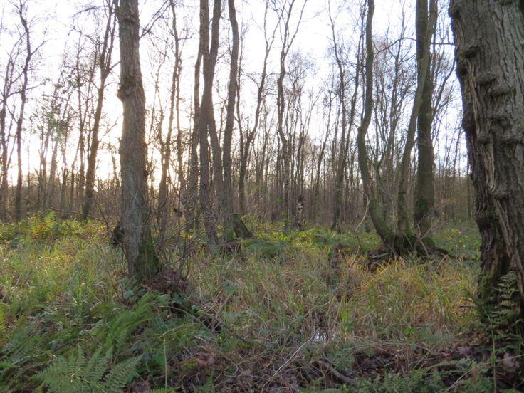 2016-01-10 Het natte bos van Huize Diepenheim