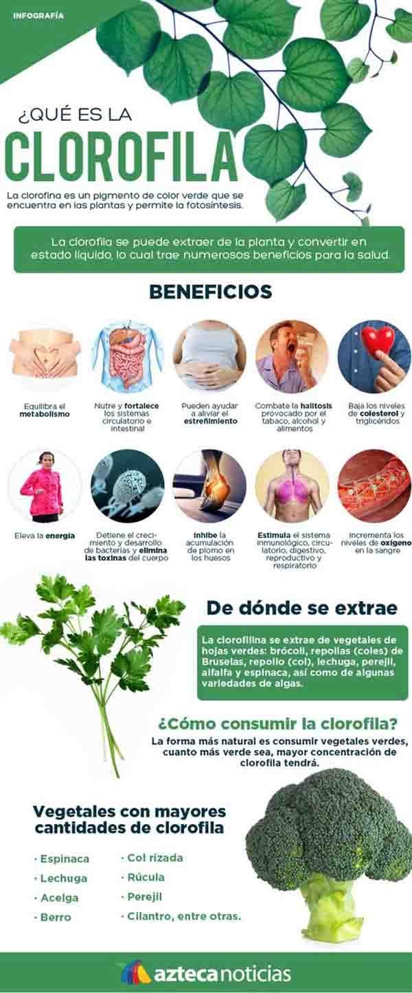 Beneficios de la clorofila y alimentos que mayor cantidad poseen. #clorofila #salud #infografias