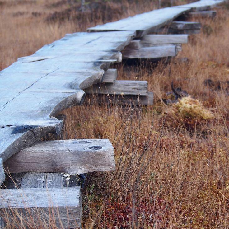 Torronsuon kansallispuisto pitkospuut / Torronsuo nationalpark duckboards