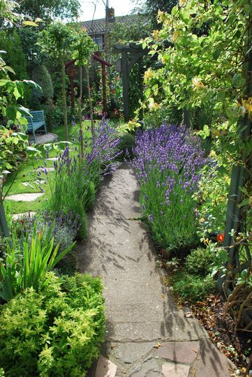Love the lavender beside the path