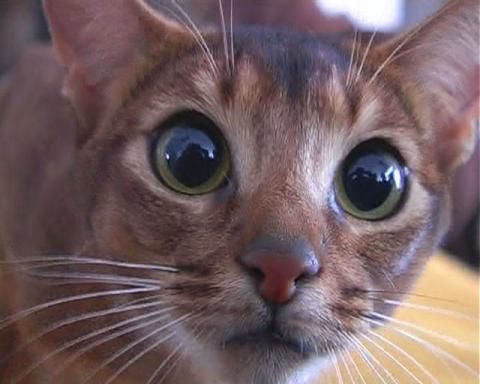 Самые страшные факты о кошках