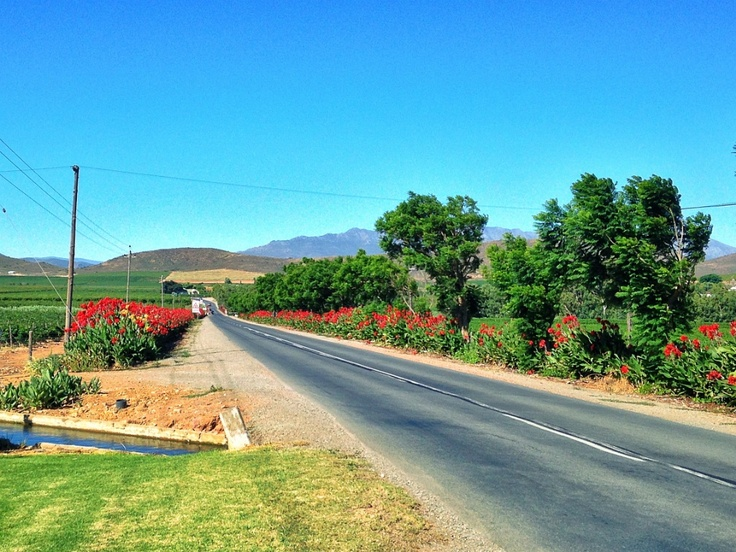 The Breede Valley in the Cape Winelands is a magical place to spend a country afternoon (or longer).