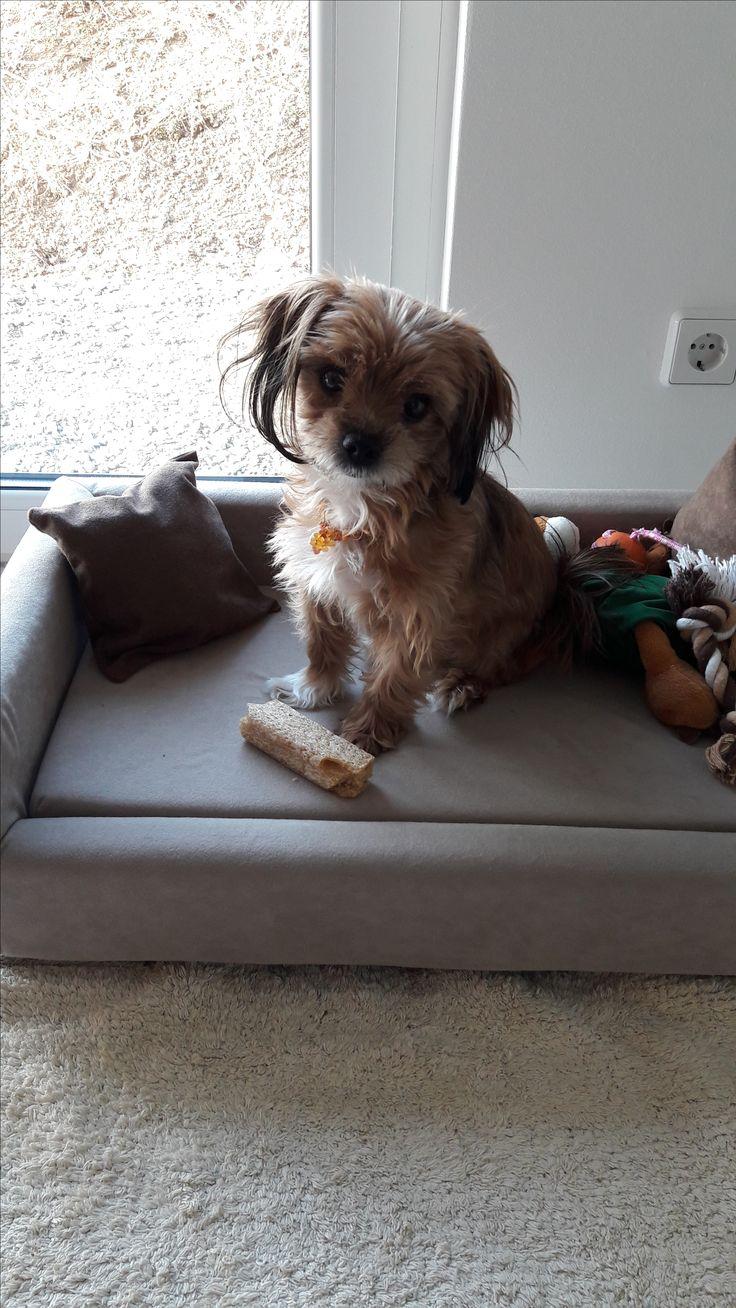 Hunde Foto: Stephanie und Luna - Luna unsere Prinzessin, so süß 😚 Hier Dein Bild hochladen: http://ichliebehunde.com/hund-des-tages  #hund #hunde #hundebild #hundebilder #dog #dogs #dogfun  #dogpic #dogpictures