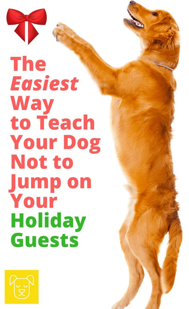 The Easiest Way To Teach Your Dog Not To Jump On People Training