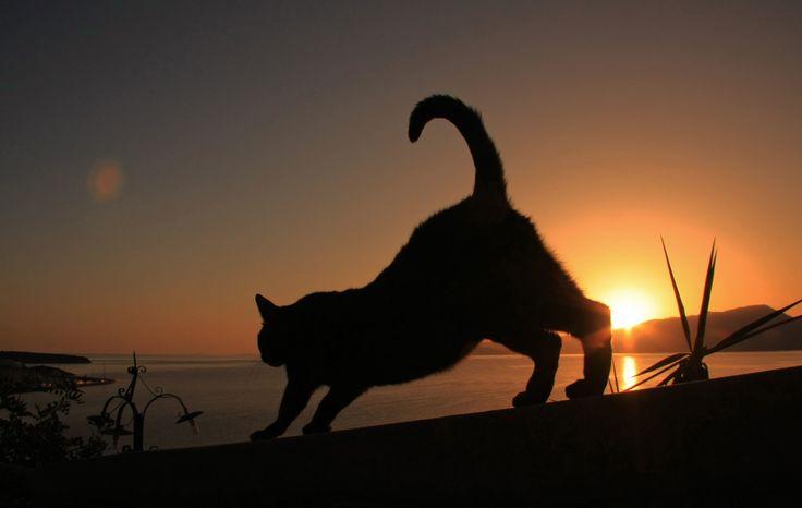 Cretan Cat at dawn by Adam Konieczny on 500px