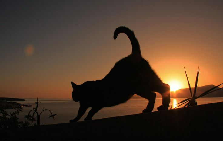 Cretan Cat at dawn by Adam Konieczny on 500px