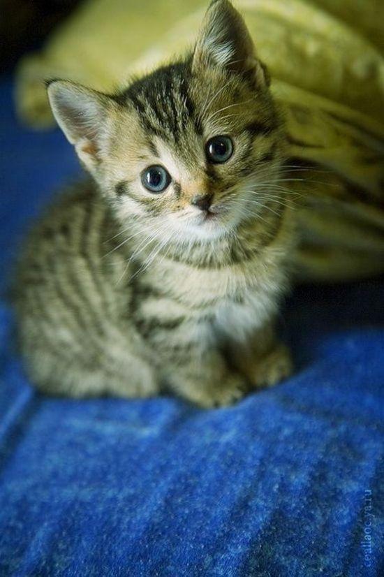 cute little kitty . . .