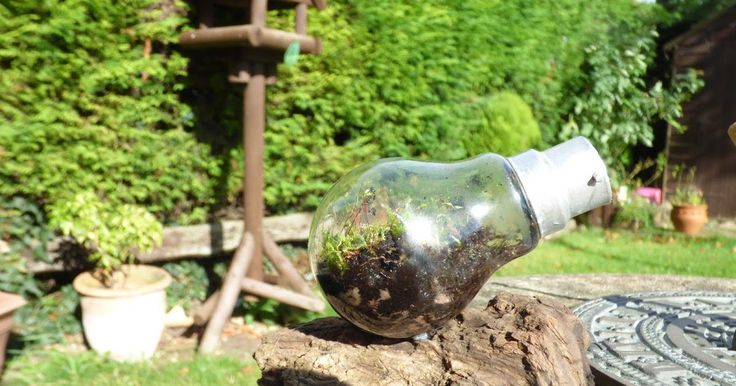 I have seen a few small Terrarium in jars and lightbulbs before and decided to have a go at making on one myself.   I couldn't find any clea...