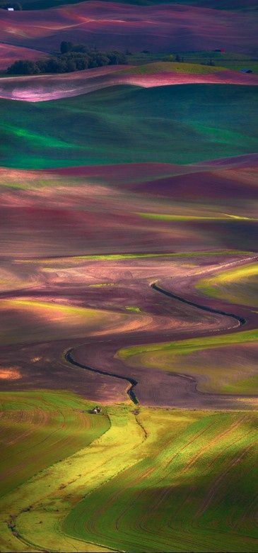 Tapestry of colors in the Rolling Hills of the Palouse in Eastern Washington