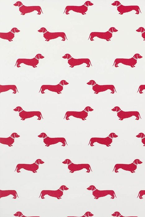 Red Dachshund Wallpaper At Emily Bond UK