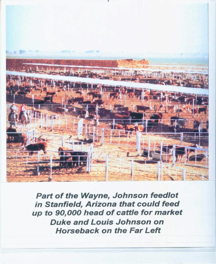 Wayne Johnson 90,000 head feedlot in Stanfield, AZ. Duke and Louis horseback on far left.