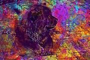 "New artwork for sale! - "" Chow Chow Tibet Lion Dog Lion Look  by PixBreak Art "" - http://ift.tt/2u6Hl8V"