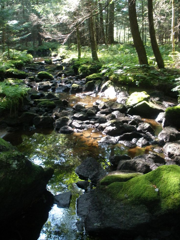 19 best Trails Near Me images on Pinterest | Trail, Maine ...