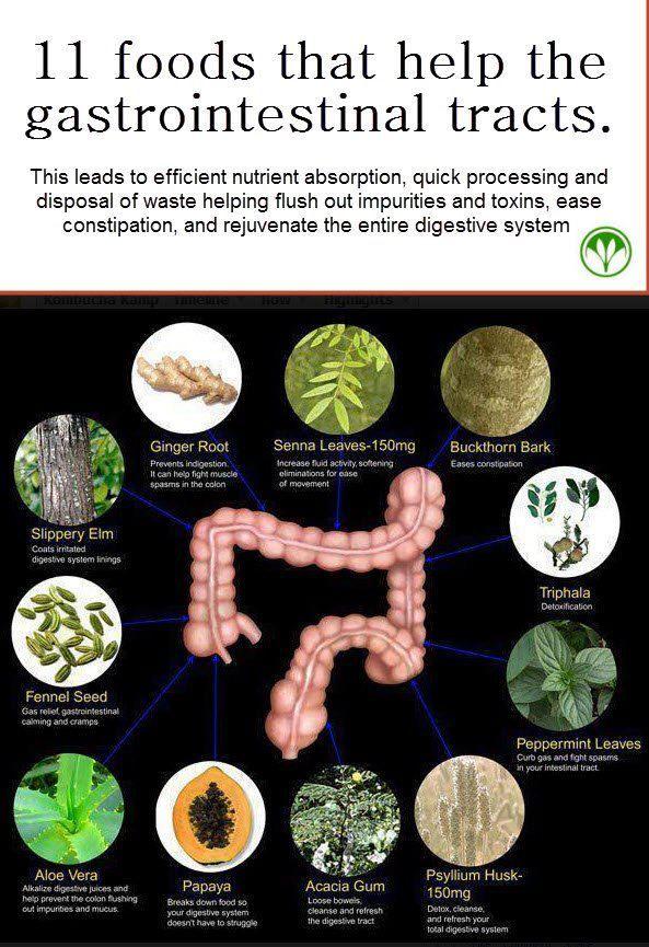 Foods for intestinal health
