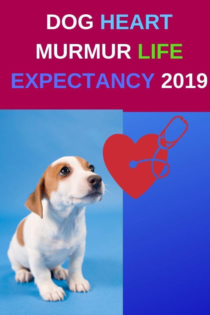 Hugpetproducts Heart Murmur Health Matters Dogs
