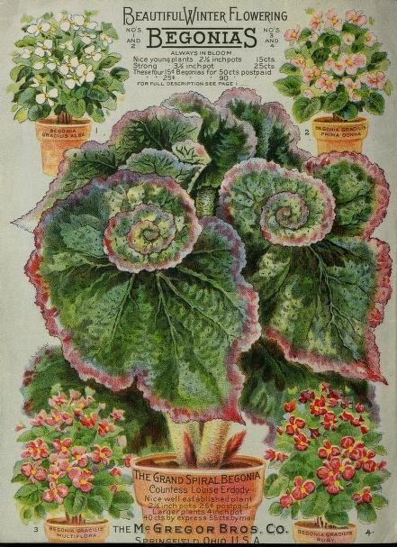 McGregor Bros 'Floral Gems for Autumn' 1911
