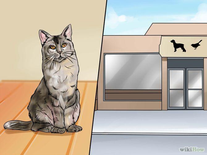 Remove Cat Urine Smell