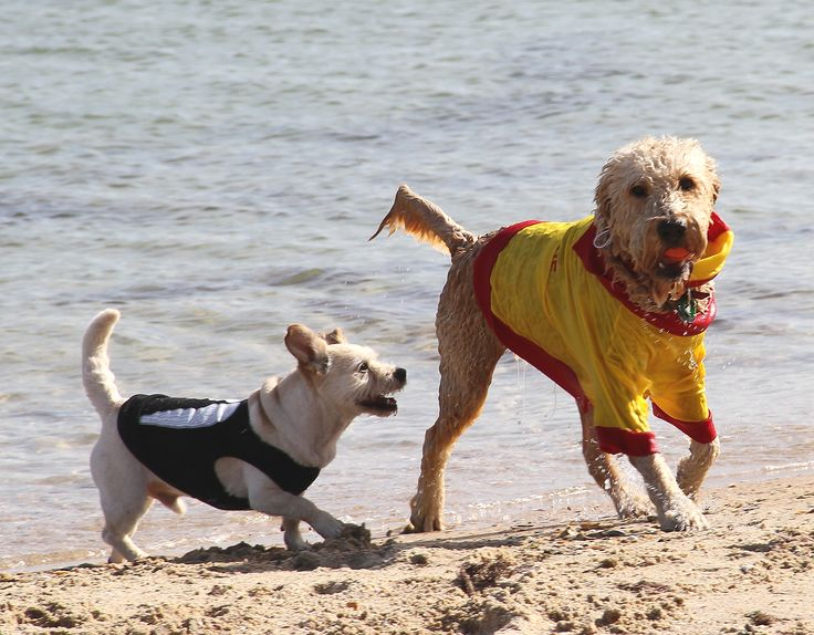 Surf Rescue and Angel Wings shirt - too cute