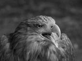 Wild Shots competition Bird of Prey by Jaromir Mosner