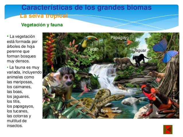 Caracter sticas de los grandes biomas la selva tropical for Arboles de hoja perenne para clima frio