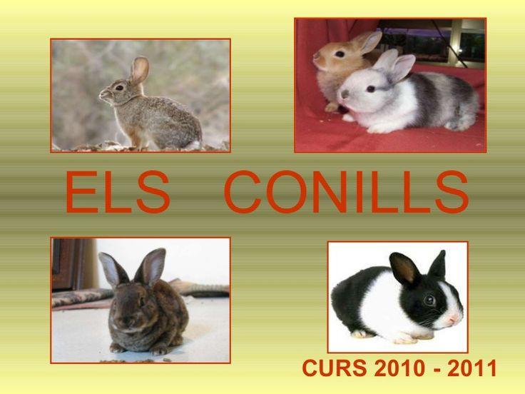 Power conills by Garrido1 via slideshare