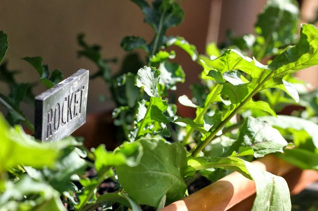 Under our own olive tree: Revamping the herb garden