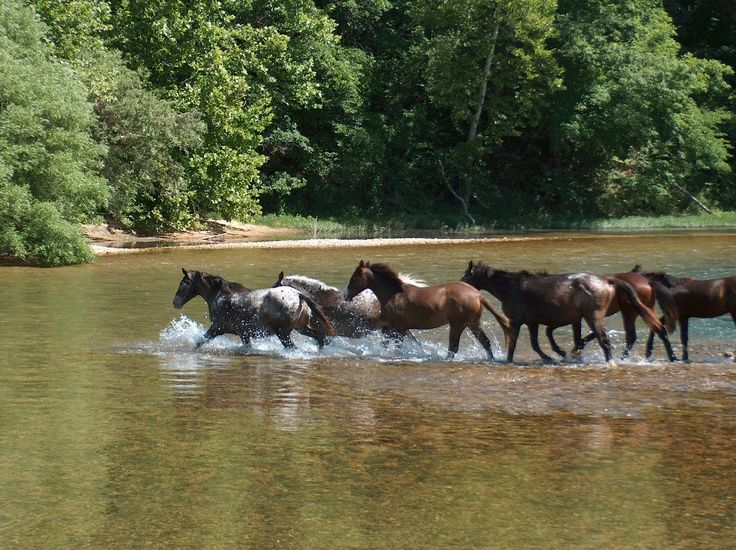 Shannon County boasts two great Missouri Rivers – the Current and Jack's Fork & about 35 wild horses that roam freely between these two rivers near Eminence.