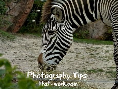 Zoo Photography http://www.photography-tips-that-work.com/zoo-zoo-photography.html