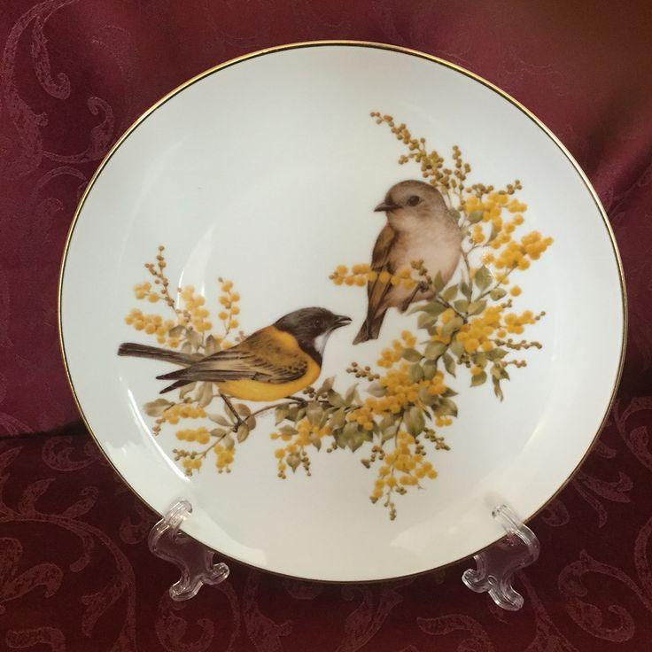 Beautiful bush birds